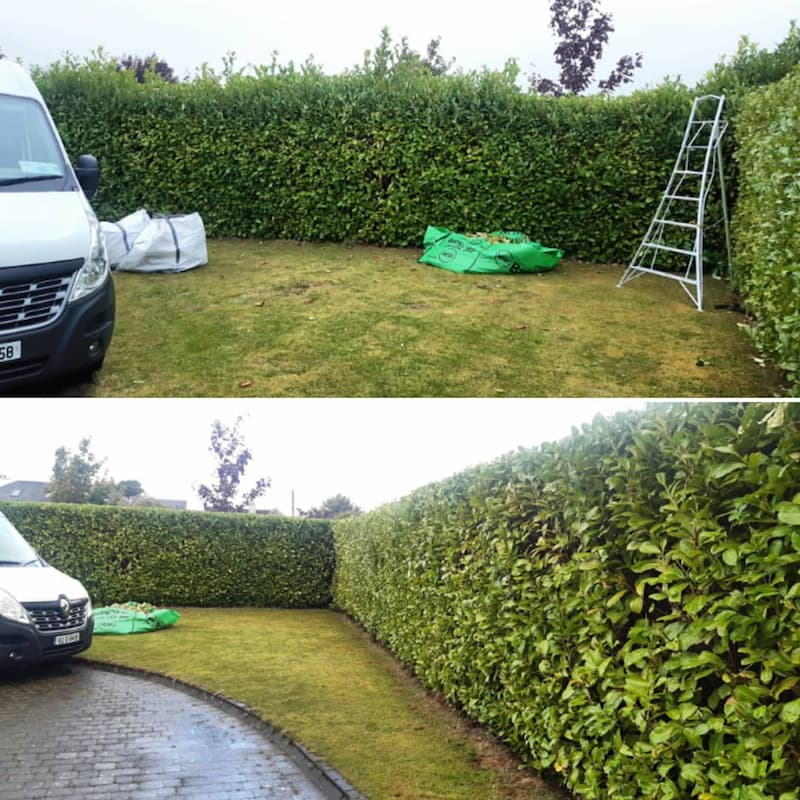 gardeners doing a hedge reduction
