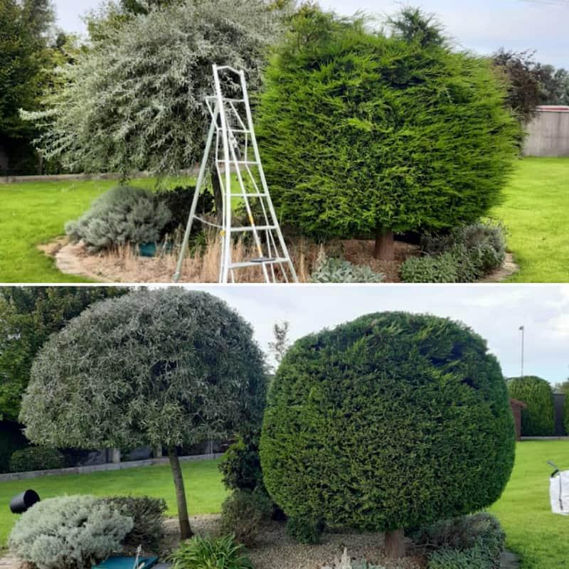 gardeners shrub trimming